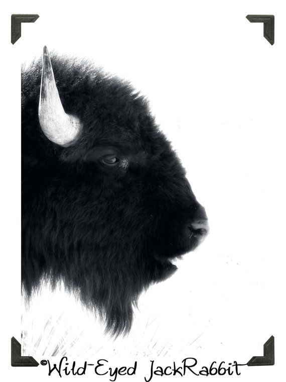 Bison clipart female buffalo.  best pics images
