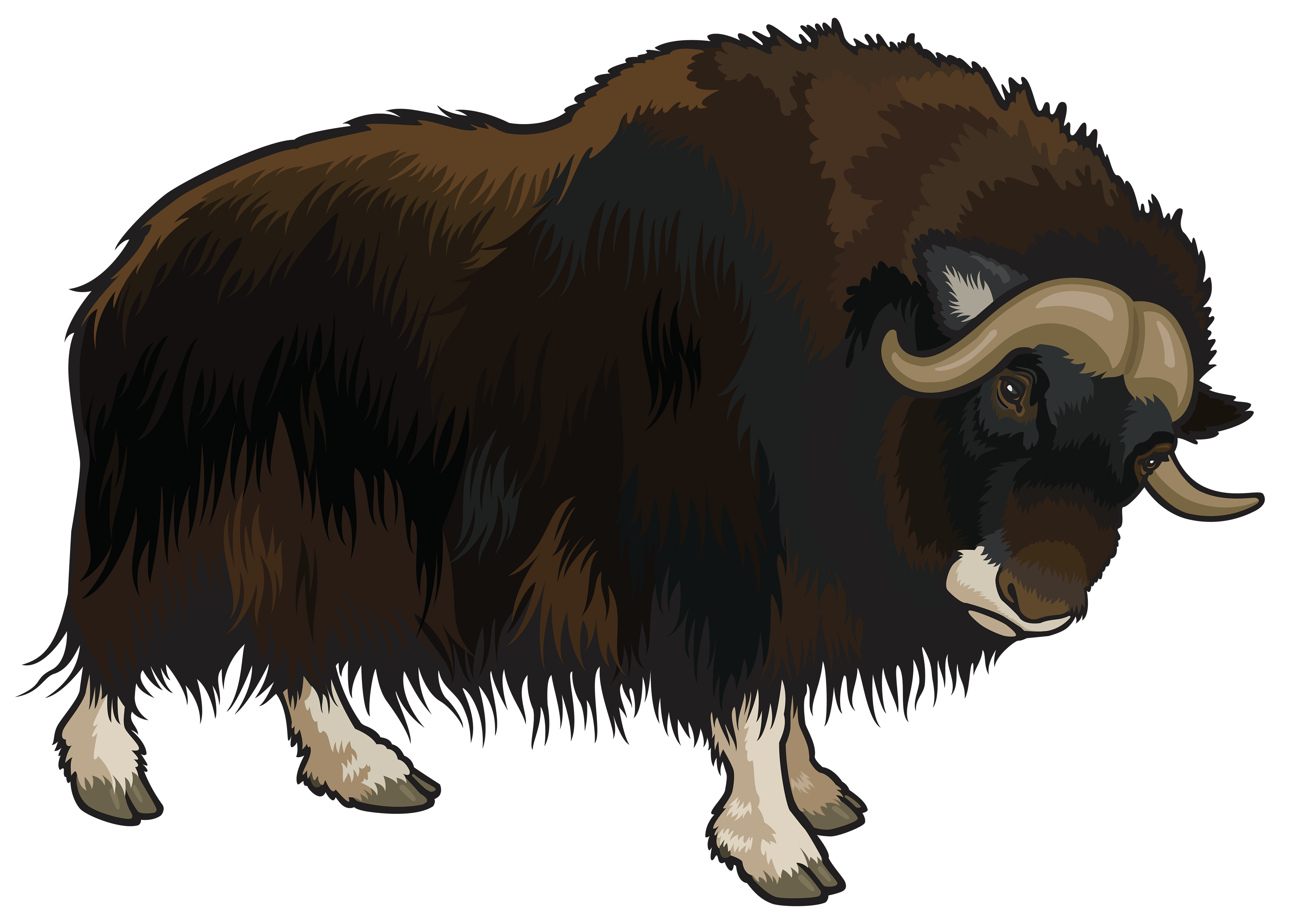 Buffalo png best web. Ox clipart ox face