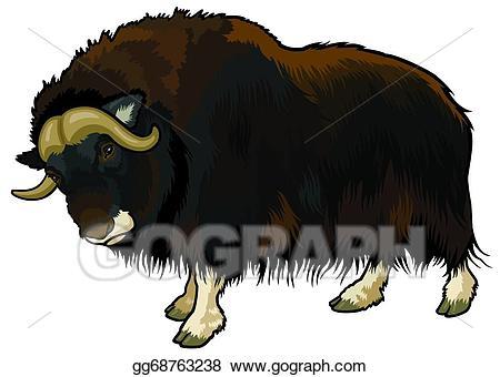 Vector art drawing gg. Bison clipart muskox