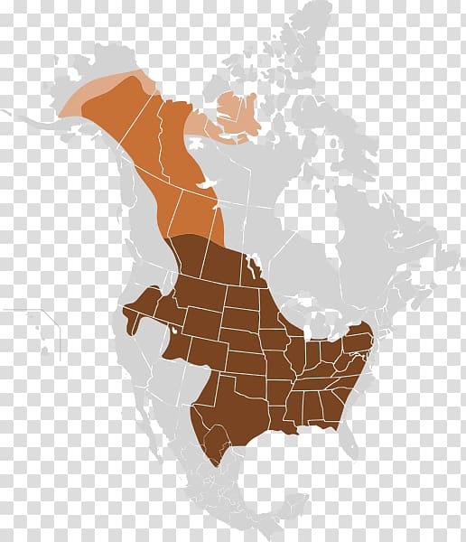 Bison clipart plains indians. National range cattle herd