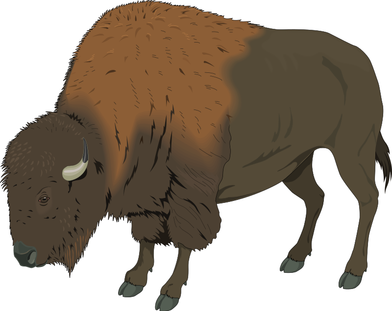 Panda free images bisonclipart. Bison clipart simple