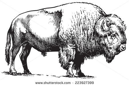 Free black cliparts download. Bison clipart sketches