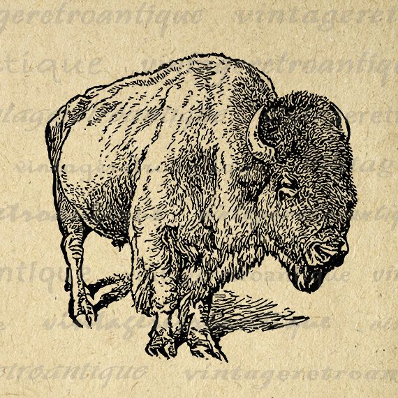 Bison clipart sketches. Printable image buffalo graphic