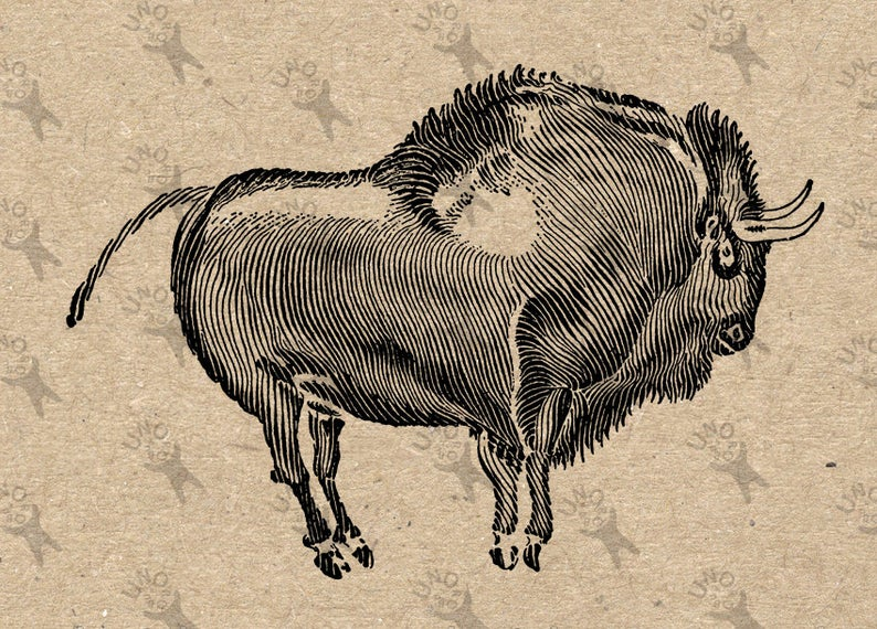 Bison clipart sketches. Vintage image cave paintings