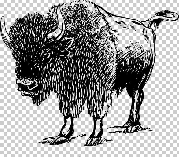 Bison clipart sketches. American drawing png art