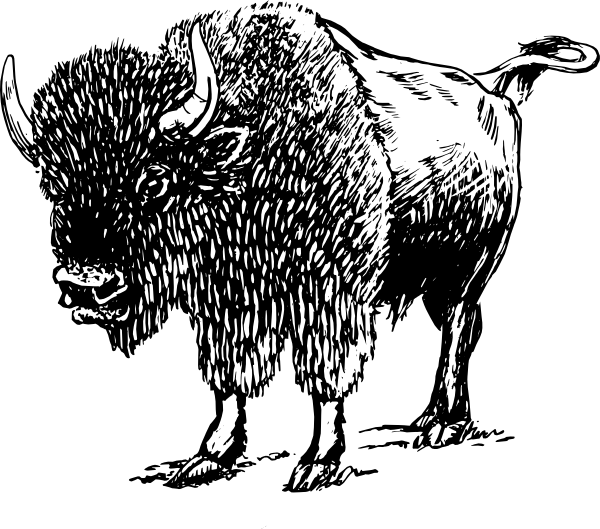 Bison clipart transparent. Clip art at clker