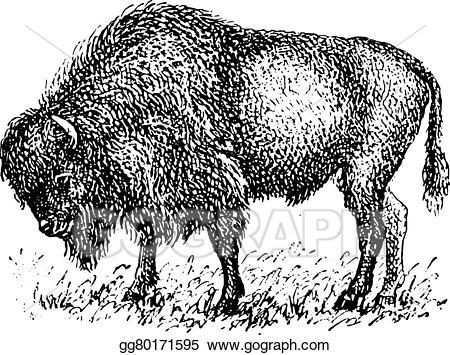 Bison clipart vintage. Vector illustration engraving stock