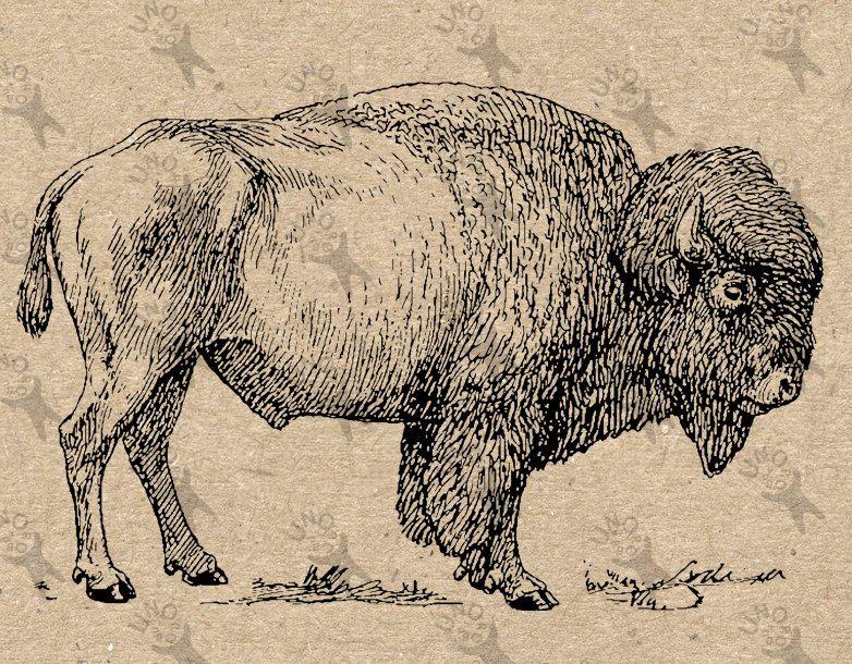 Image instant download digital. Bison clipart vintage