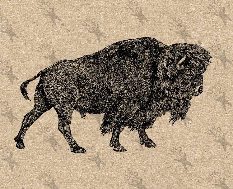 Bison clipart vintage. Image instant download digital