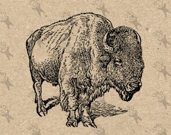 Bison clipart vintage. Graphic art etsy image
