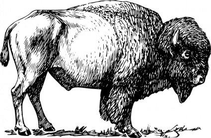 Bison clipart vintage. Free psd files vectors