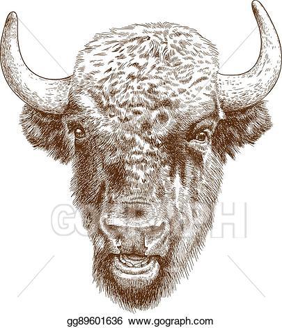 Bison clipart white background. Vector art engraving antique