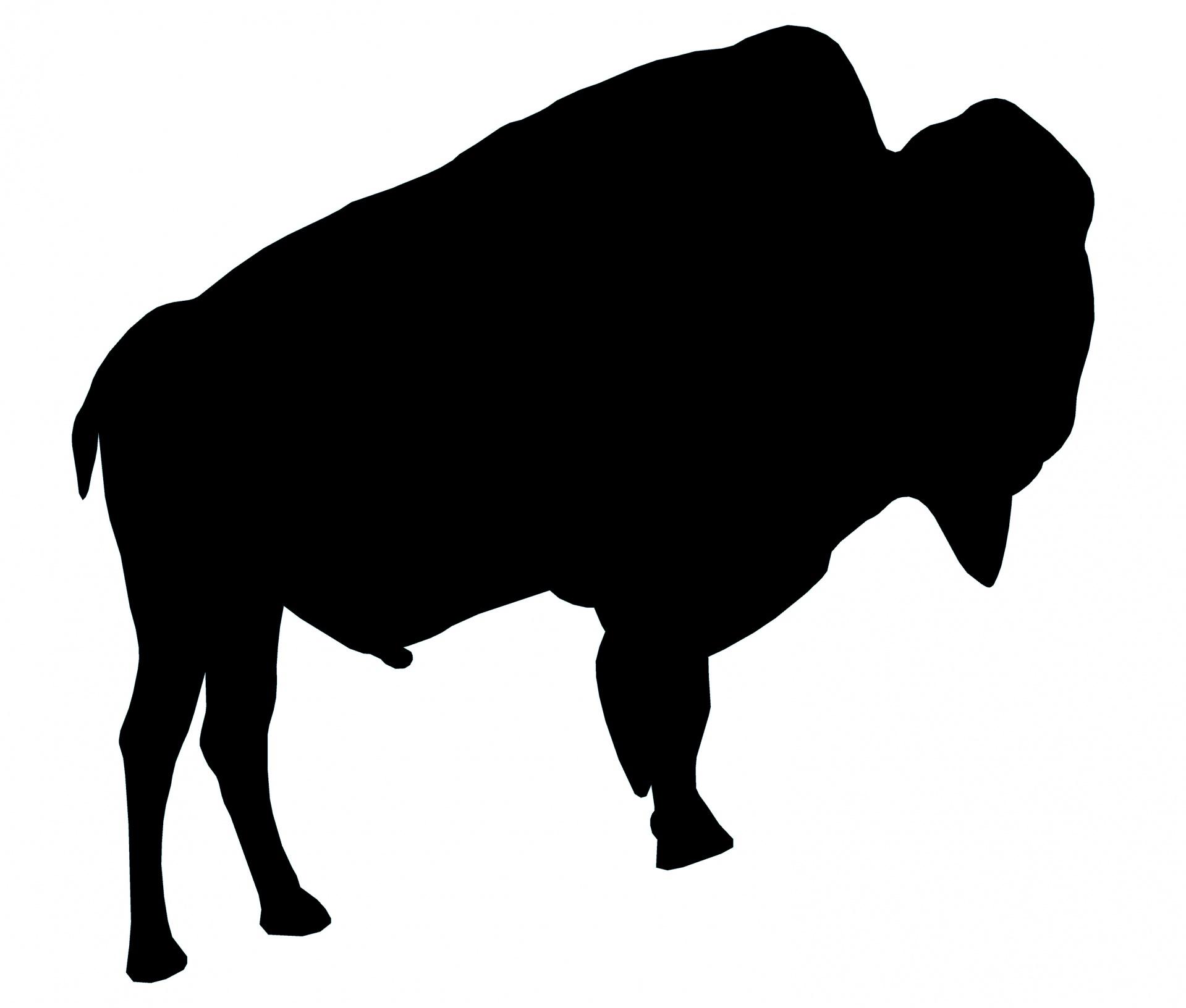 Black free stock photo. Bison clipart white background
