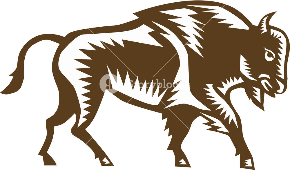 Bison clipart white background. Illustration of an american