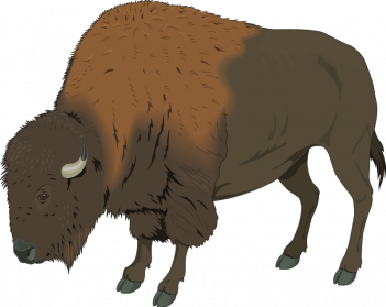 Png images transparent free. Bison clipart white background