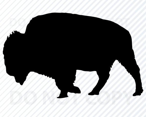 Bison clipart wild buffalo. Svg files for cricut