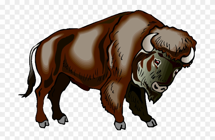 Water the clip art. Bison clipart wild buffalo