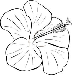 Black and white flower. Bouquet clipart hibiscus