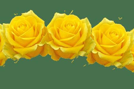 Beautiful flowers filter various. Black flower crown png