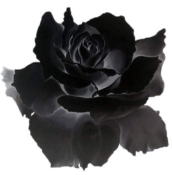 Black flower png. Image rose clipart animal