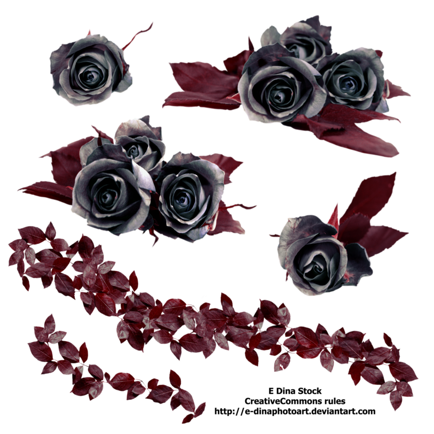Stock roses by e. Black flower png