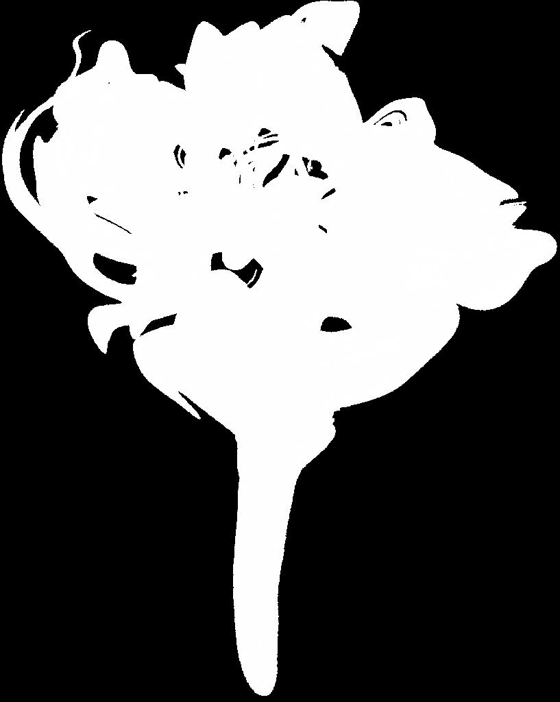 white transparent onlygfx. Black smoke png