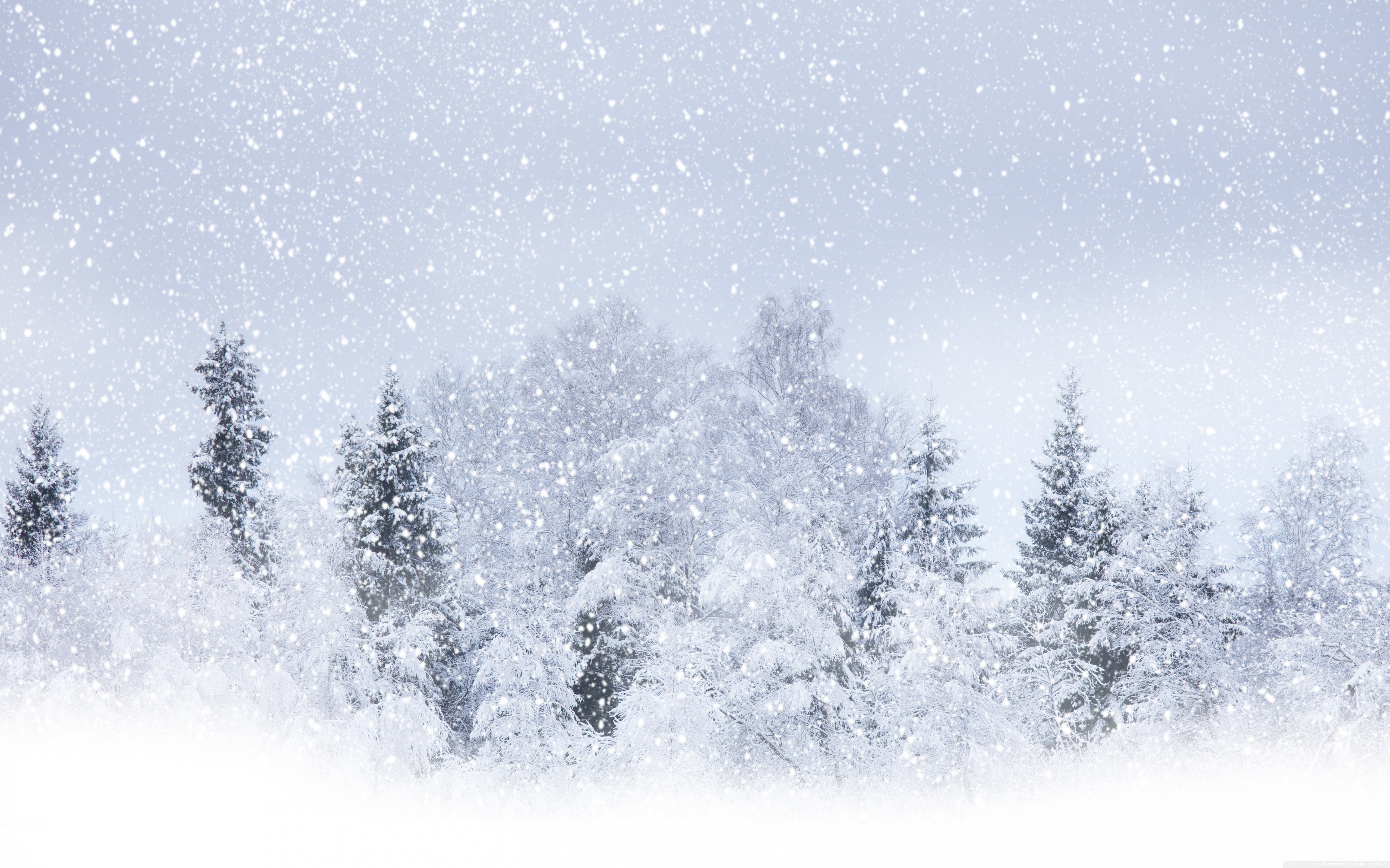 Snowstorm in the wood. Blizzard clipart frost