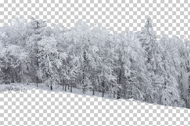 Snow forest stock xchng. Blizzard clipart frost