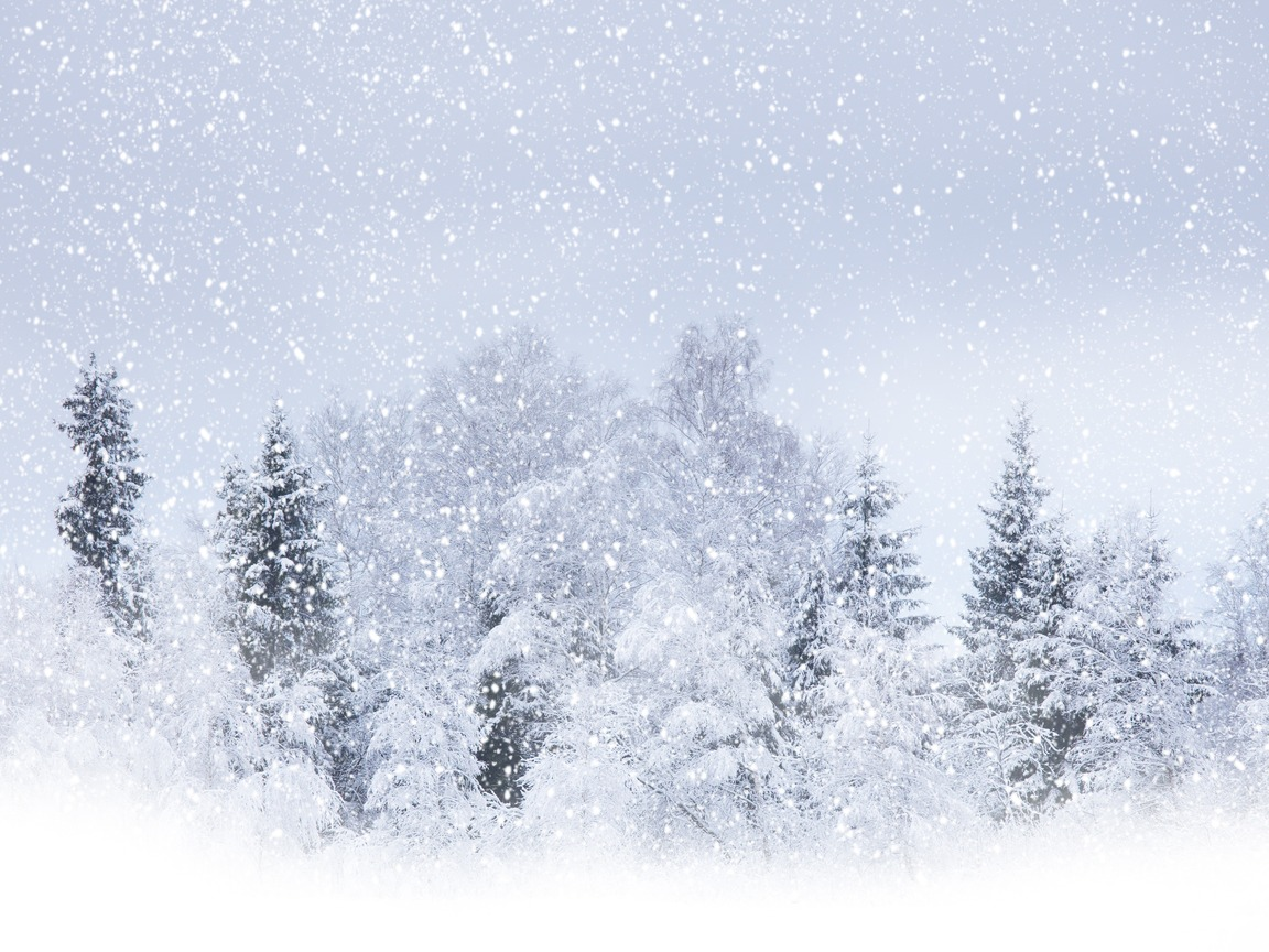 Download wallpaper winter forest. Blizzard clipart snowfall