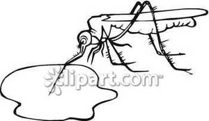 Blood clipart black and white. A mosquito drinking puddle
