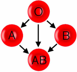 Everyone should know their. Blood clipart blood typing