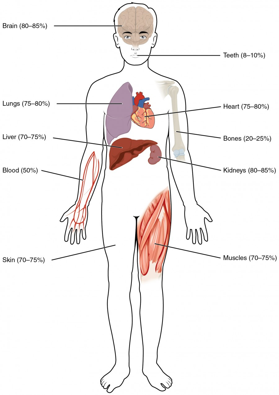 Blood clipart bodily fluid. Body fluids and compartments