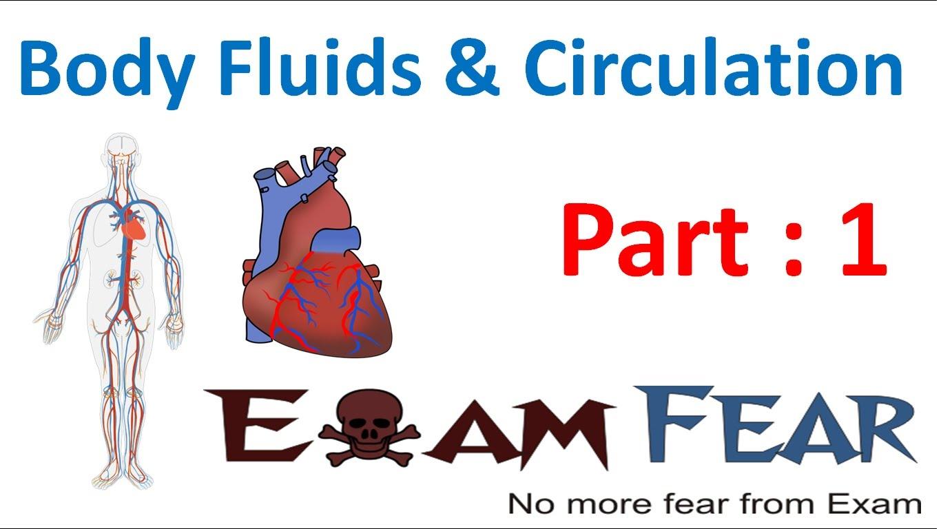 Biology body fluids circulation. Blood clipart bodily fluid