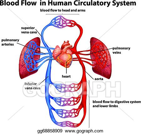 Eps vector flow in. Blood clipart human blood