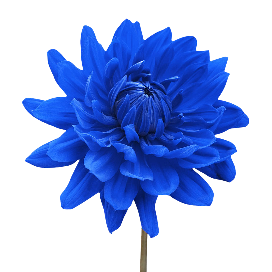 for free download. Blue flower png