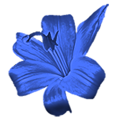 Blue flower png.  for free download
