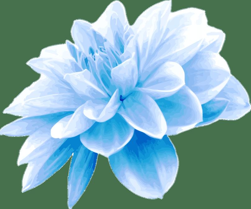 Images djiwallpaper co clipart. Blue flower png
