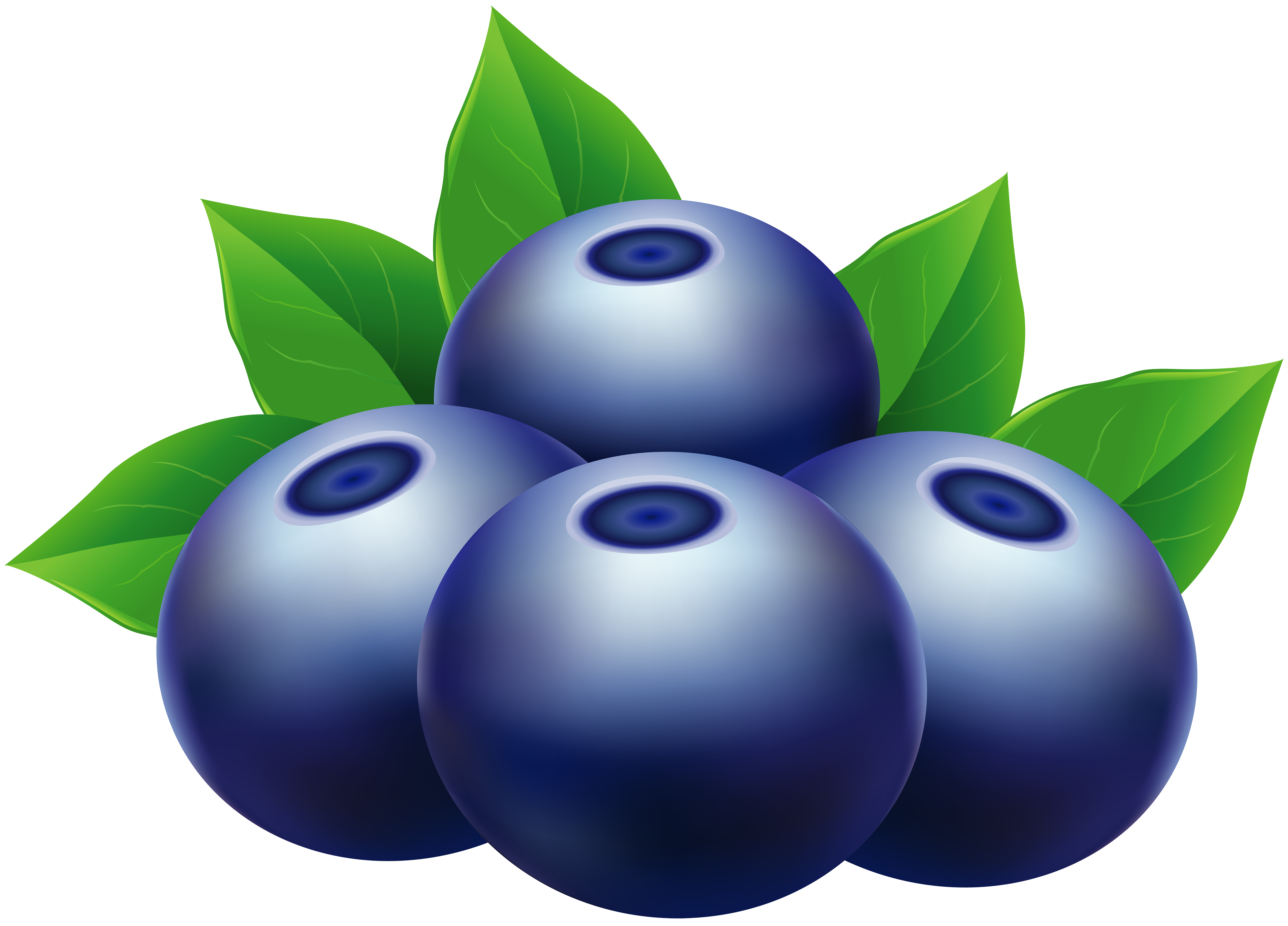 blueberries clipart