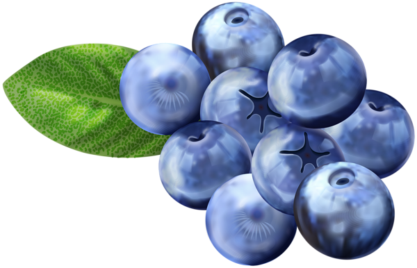 Blueberries clipart. Png clip art image