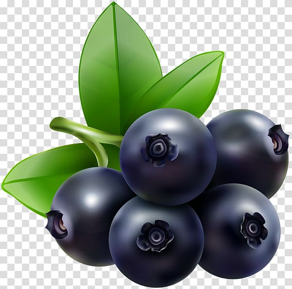 Blueberries clipart. Blueberry bilberry food transparent