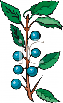 Picture of blueberries still. Blueberry clipart animated