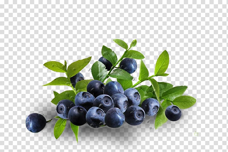 Blueberry clipart antioxidant. Dietary supplement eye zeaxanthin