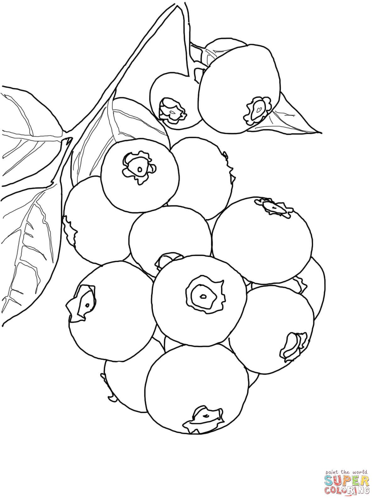 Blueberries clipart black and white. Blueberry coloring pages free