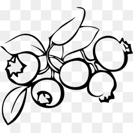 Fruit png images vectors. Blueberries clipart black and white