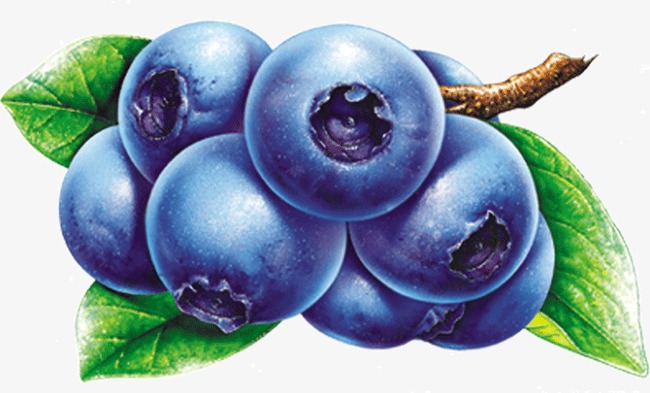 Blueberry fruit png image. Blueberries clipart blue food