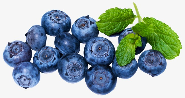 Blueberries clipart blue food. Blueberry berry fruit png