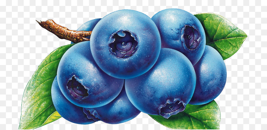 Bilberry drawing clip art. Blueberry clipart blue food