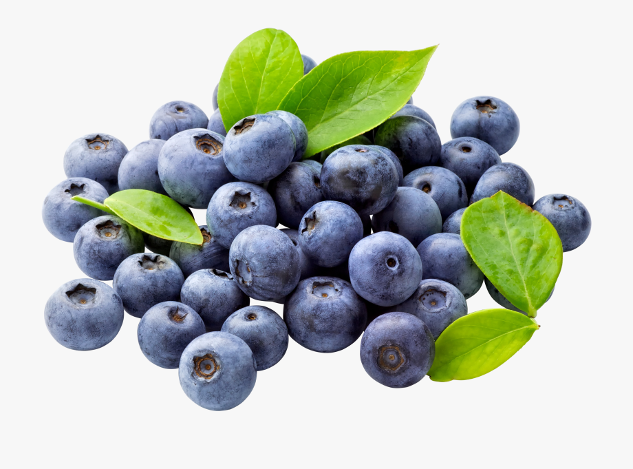 Blueberry png free download. Blueberries clipart blue food
