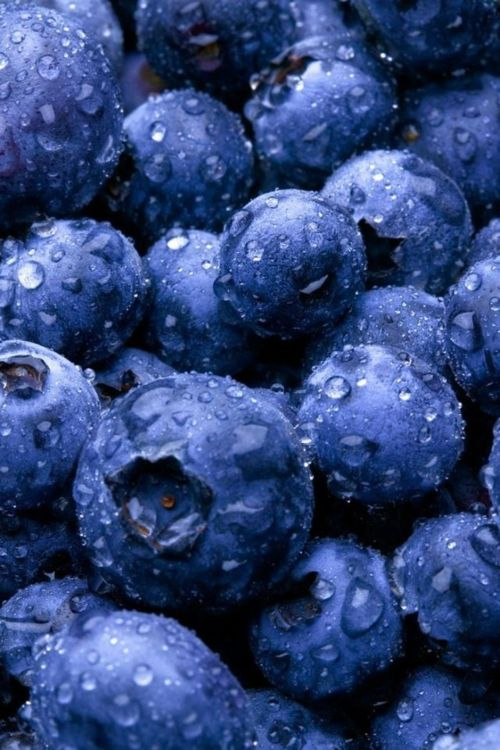 best breezing images. Blueberries clipart blue object