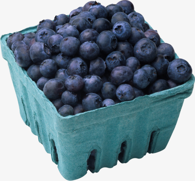 Of blueberries hand painted. Blueberry clipart blueberry basket